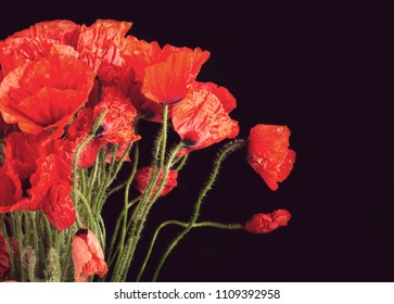 Red poppy flowers isolated on black background