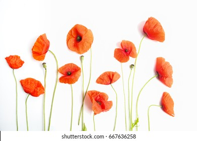 red poppy images stock photos vectors shutterstock