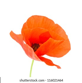 A red poppy isolated on the white background. Shallow depth-of-field.