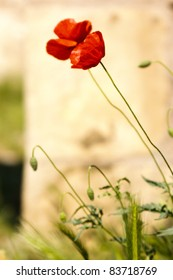 Red poppy pair at castle ruins