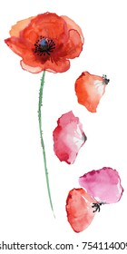 Red poppy and petals. Watercolor illustration.