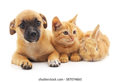 Red puppy, kitten and bunny on a white background.