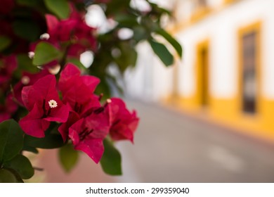 Red and purple flowers in a colorful street in Merida, Spain