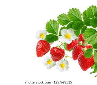 red raw strawberries on white