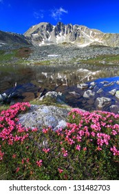 Red rhododendron flowers and glacier lake reflecting mountains, Retezat mountains, Romania