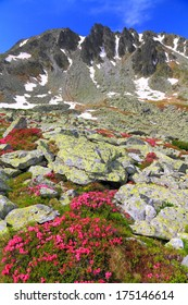 Red rhododendron flowers scattered on rocky valley