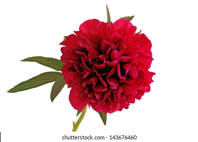 Red Rhododendron (Isolated)