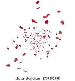 Red ribbed rose petals swirl in the air. White isolated background