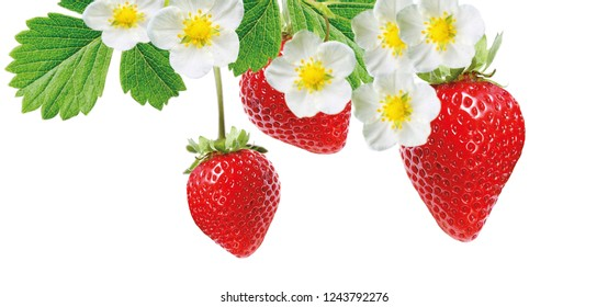 red ripe freshness strawberries