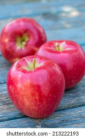 Red ripe Honeycrisp apples fresh from the farm.