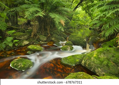 Red river through lush temperate rainforest in the Garden Route National Park in South Africa.