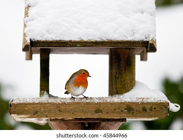 A red robin at a snow-covered bird house in winter. Photo has short depth of field and space for your text.