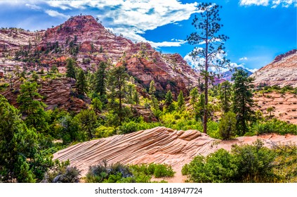 Red rock canyon forest landscape. Mountain red rock canyon forest. Red rock canyon forest landscape. Red rock canyon forest