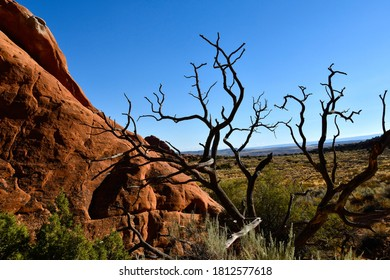 Red rocks and juniper tree at Arches National Park, Utah.