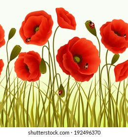 Red romantic poppy flowers and grass with ladybugs wallpaper  illustration.