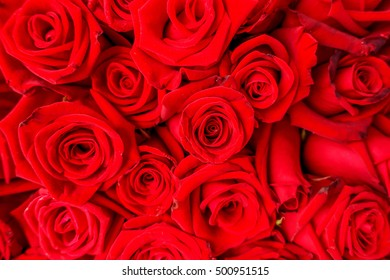 The red rose background.