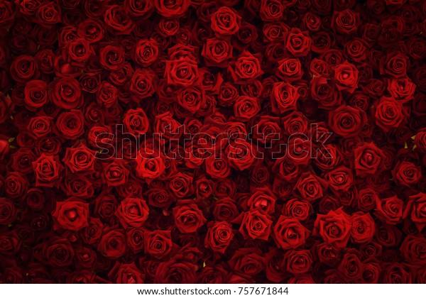 Красная роза фон.