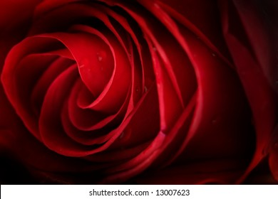 Red rose background, low DOF