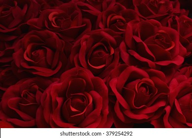 Red rose beautiful natural background texture