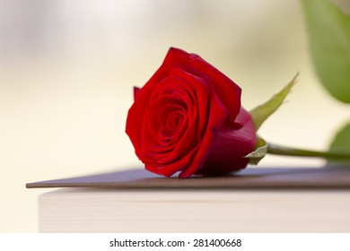 Red rose with a book.