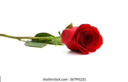 red rose bouquet on white background