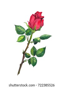 Red rose bud with leaves - one flower at stem. Watercolor
