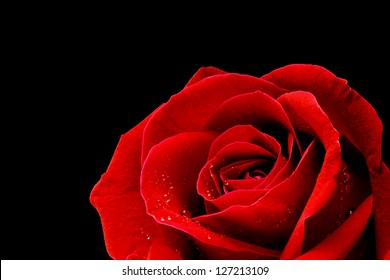 Red Rose On Black Background Images Stock Photos Vectors Shutterstock