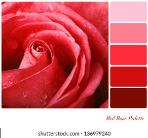 Red rose colour palette with complimentary swatches.