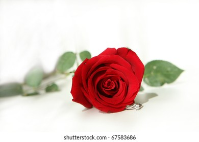 red rose and diamond ring