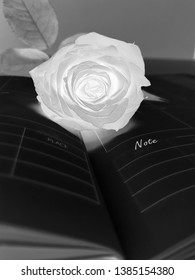 Red rose in e ray vission its look black and white but rose is very shining