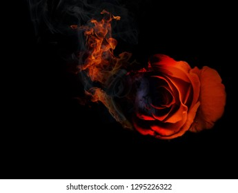 Red rose  fire on  black background, Broken love concep