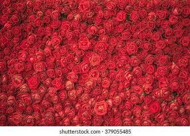 red rose flower for background