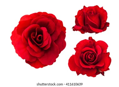 red rose flower collection  isolated on white background, set of red roses