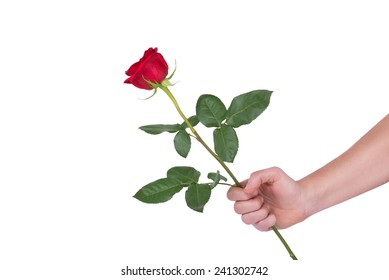 red rose flower in hand men isolated on white clipping path included