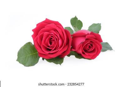 rose flower images, stock photos & vectors | shutterstock