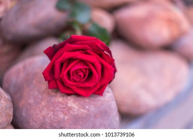 e72b4742fa756f Red rose flower nature beautiful flowers from the garden for valentines on  stone floor with copy