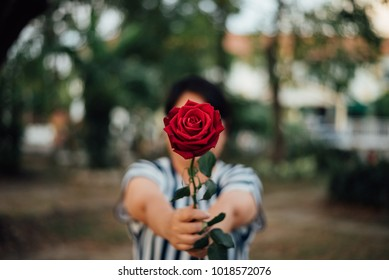 Red rose flower nature beautiful flowers from the garden and human hand holding red rose flower for valentines give with copy space in Valentine's Day, Wedding or Romantic Love Valentine concept