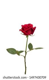 red rose flower wedding flower