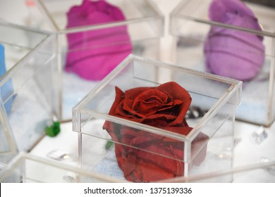Red rose.dry flower.Roses are red, pink, purple.dry flower.In a clear acrylic box.Can be decorated as a background to make a card.concept:Valentines Day,love