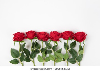 Red rose flowers in a border isolated on white background