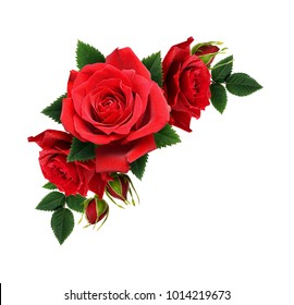 Red rose flowers in corner arrangement isolated on white background. Top view. Flat lay.