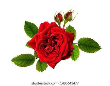 Red rose flowers in a floral arrangement isolated on white
