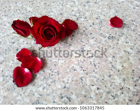 19ed3e187b5ec7 Red Rose Frame Marble Background Stock Photo (Edit Now) 1063317845 ...