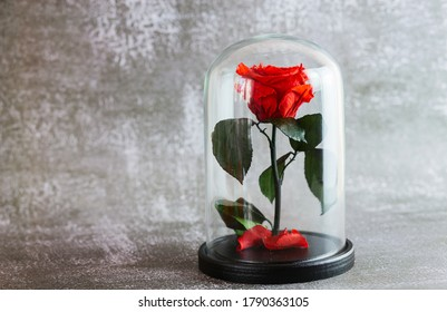 a red rose in a glass flask stands on a dark marble background with artificial light close up
