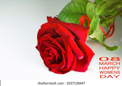 red rose with green leaf on the white background as gift on valentine days and March, 8