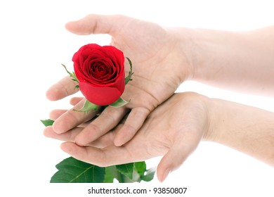 Hand Beautiful Holding Red Rose Images, Stock Photos