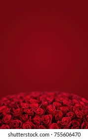 Red rose. Isolated large bouquet of 101 red rose