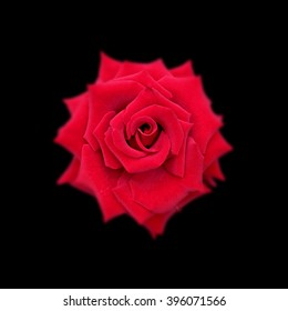Red rose isolated on a black background