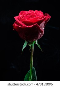 Red rose isolated on black background with smoke and water drops