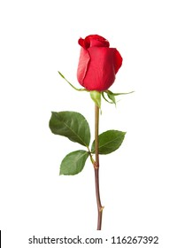 Red rose isolated on white.